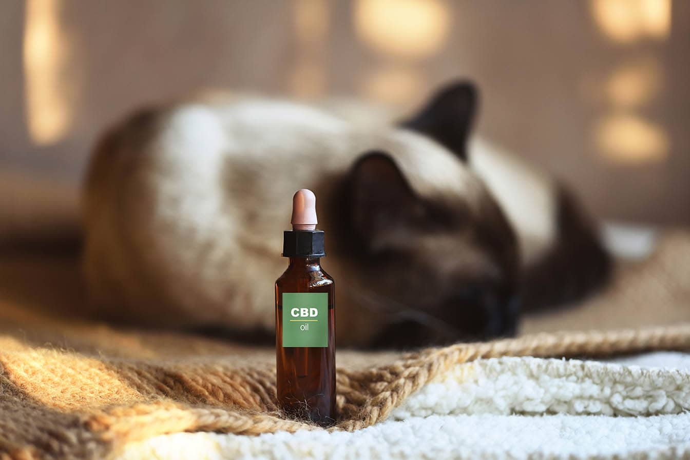 cbd oil and cat on background