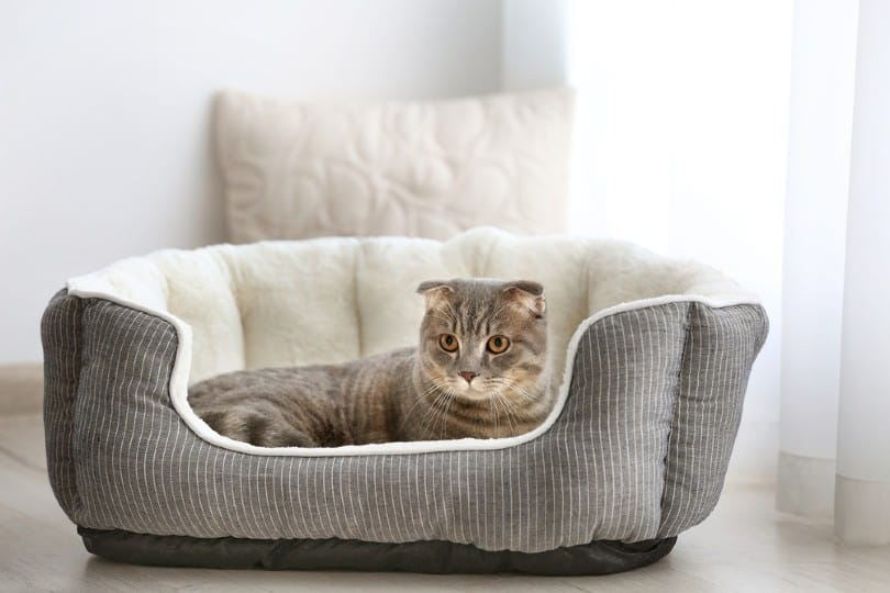 cute cat in bed at home_Africa Studio_Shutterstock