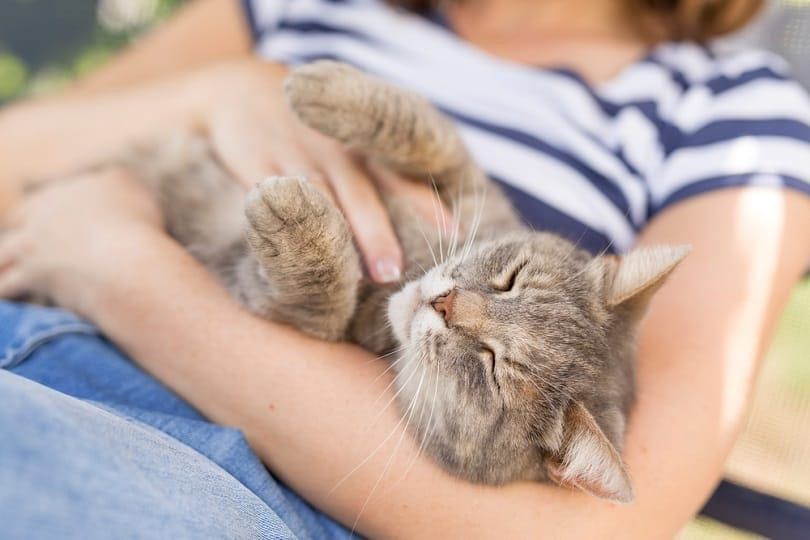 furry-tabby-cat-lying-on-its-owners-lap_Impact-Photography_shutterstock