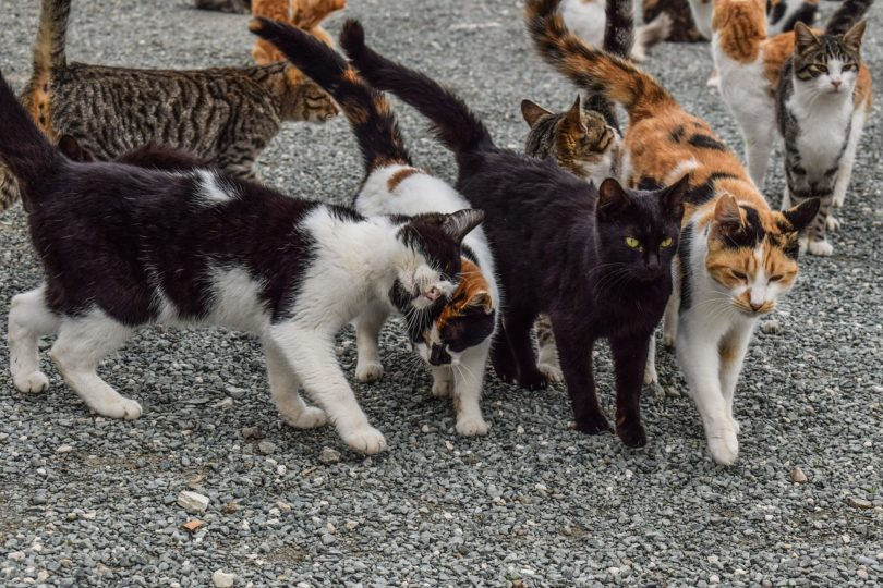 group of cats outdoor_Pixabay