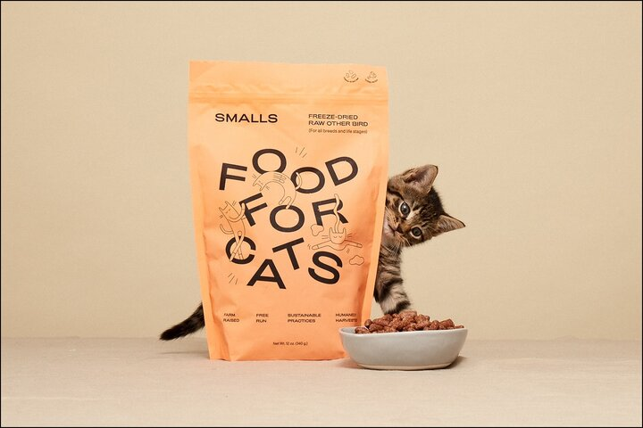cat with small food