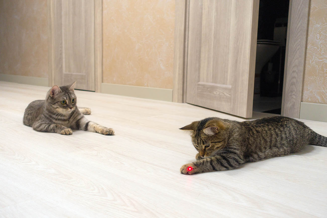 two cats playing with laser pointer
