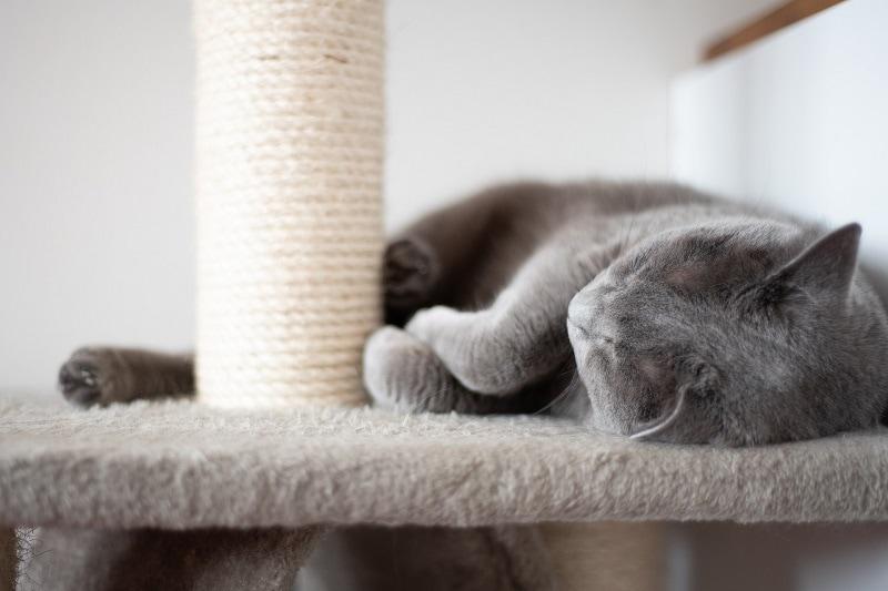 Cat Sleeping Post