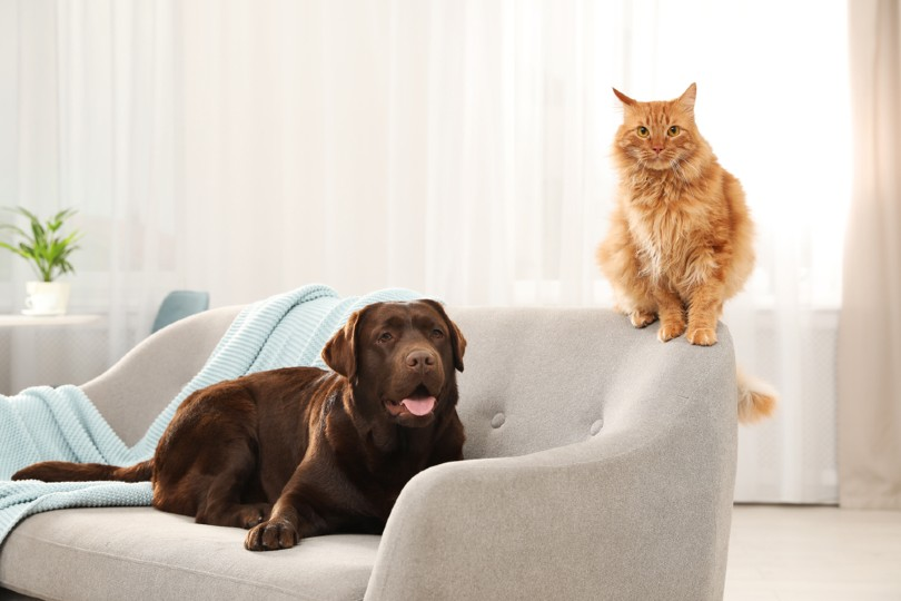 Cat and dog together on sofa indoors