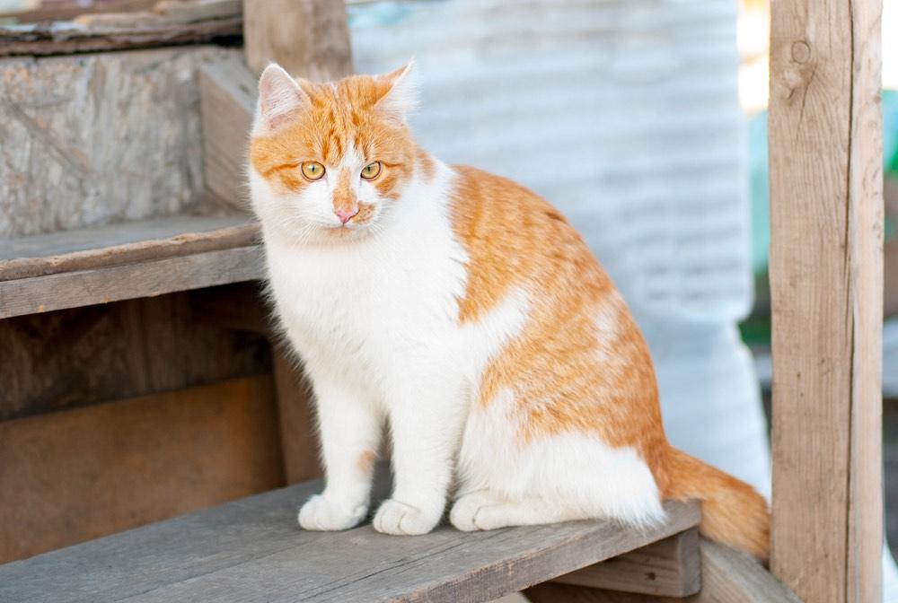 Ginger cat sitting on wooden steps