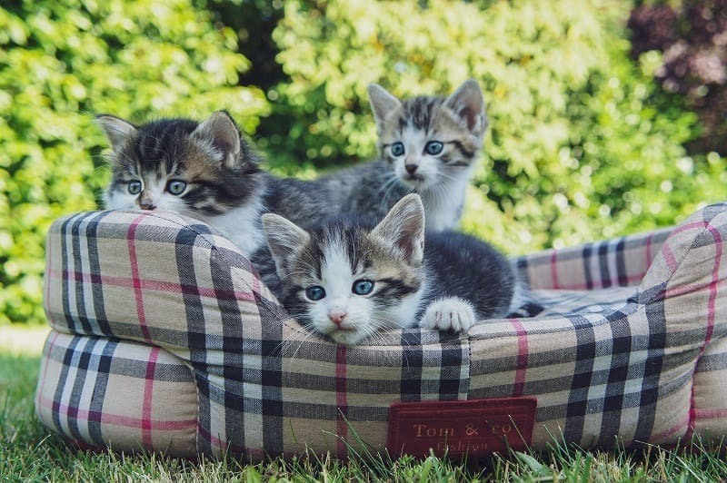 Kittens on a bed
