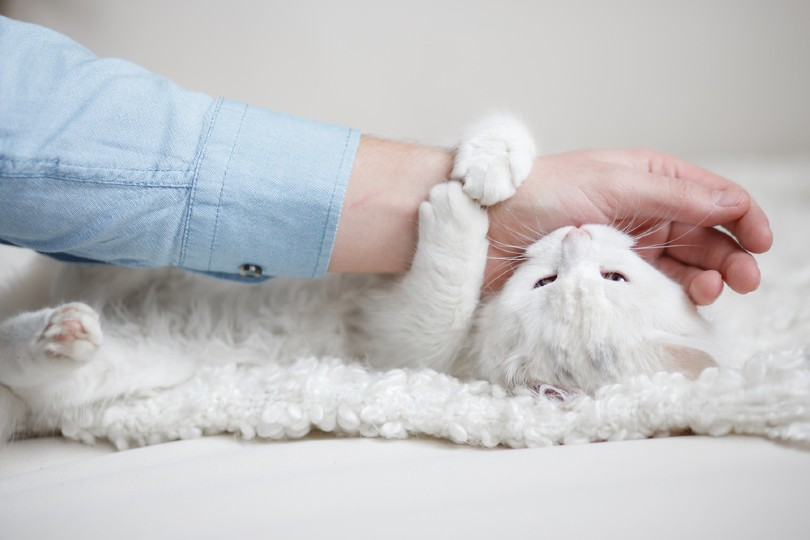 playing with cat_Vika Hova, Shutterstock