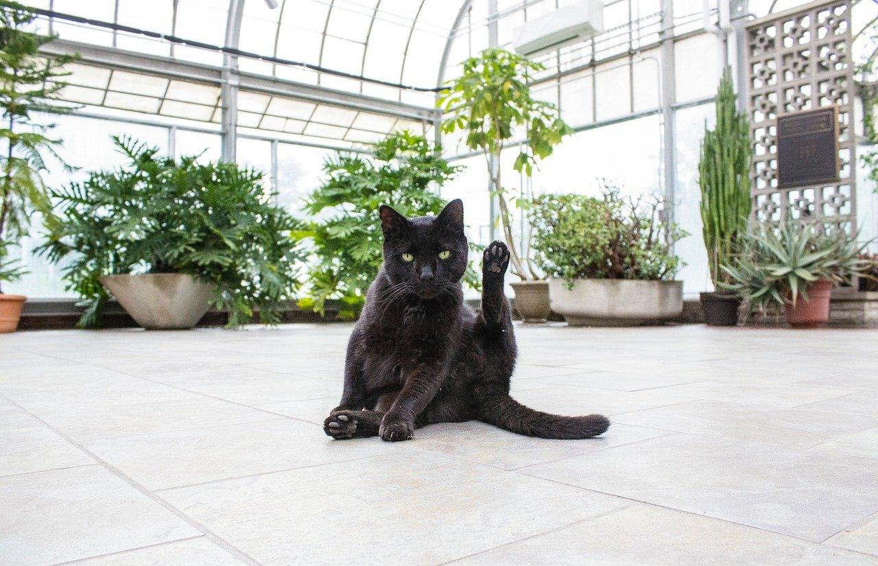 a black cat with succulent plants