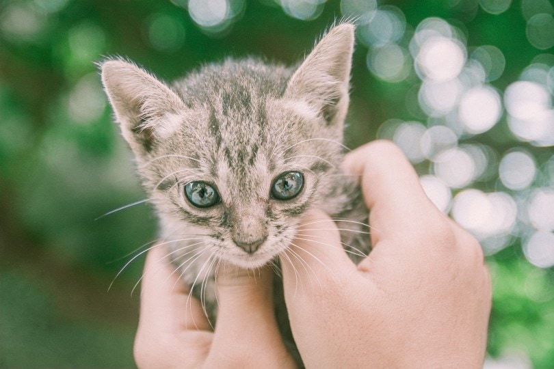 a kitten being held by a man's hand