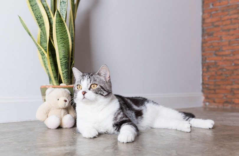 cat and air purifier tree_Foto2rich_shutterstock