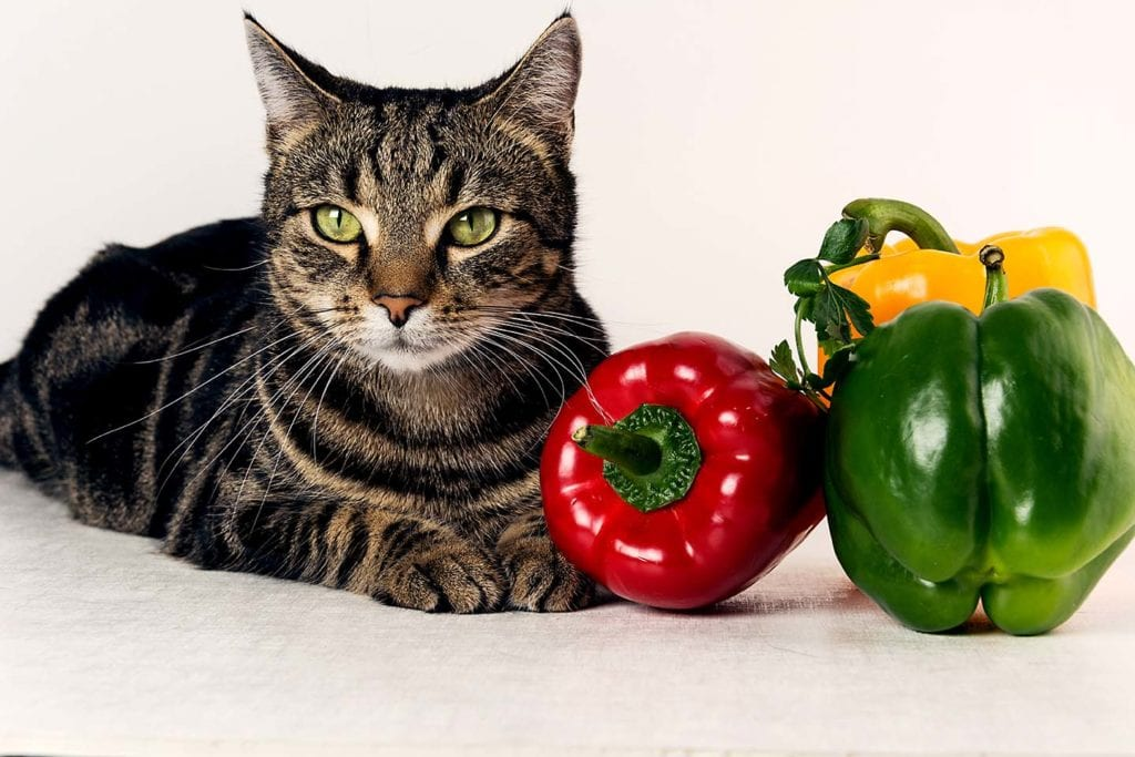 cat and bell peppers