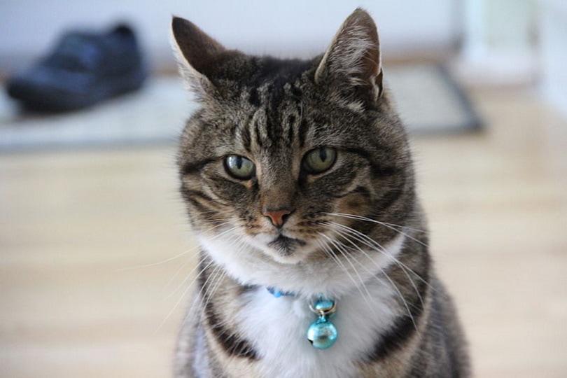 cat bell collar_Jamesington_Wikimedia