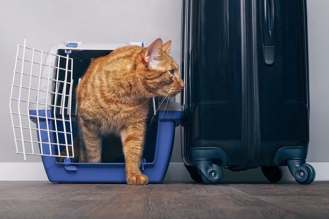 cat beside luggage