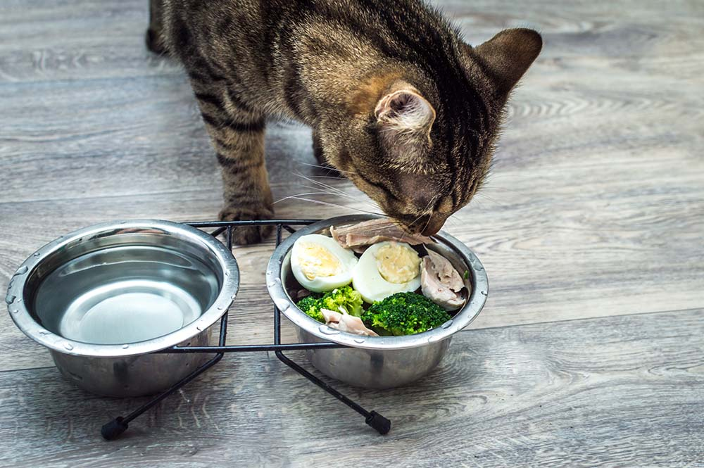 cat eating eggs and veggies
