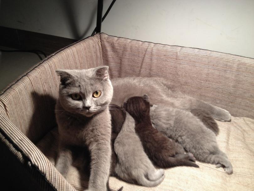 cat feeding kitten_muerstory_Pixabay