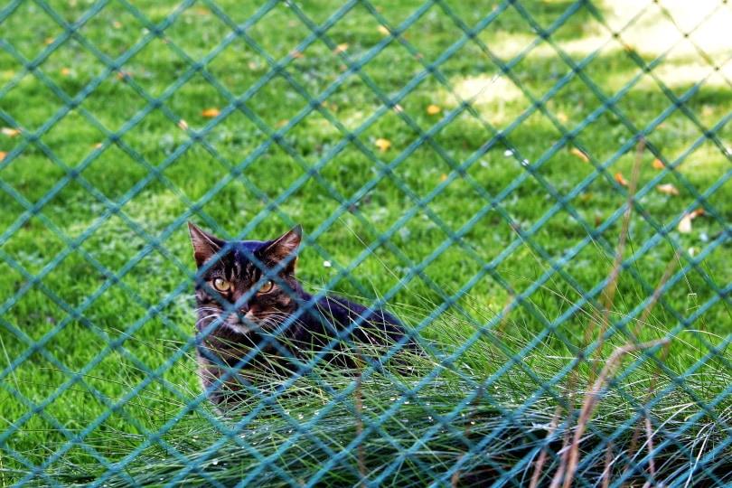 cat fencing_Lucia Gajdosikova_Shutterstock