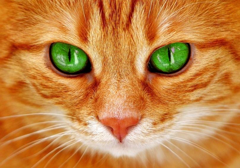 cat green eyes_Alexas_Fotos_Pixabay