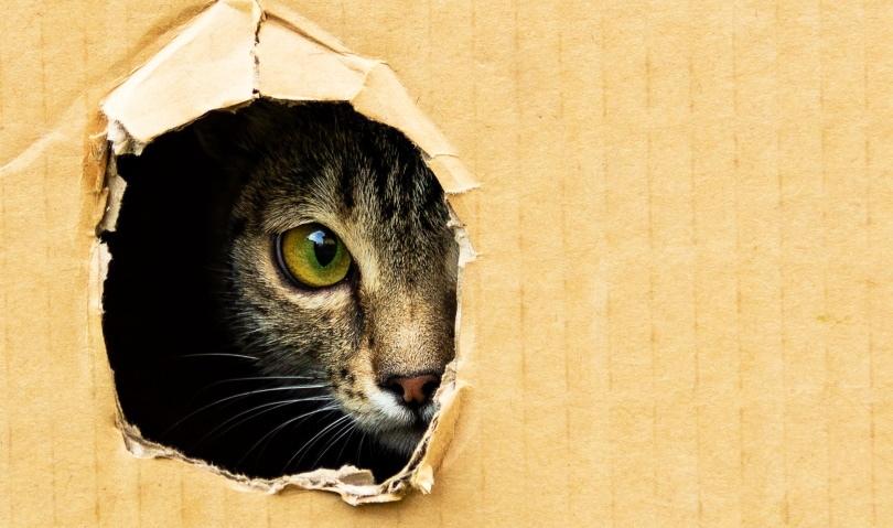 cat in box_Vladislav Karpyuk_Shutterstock