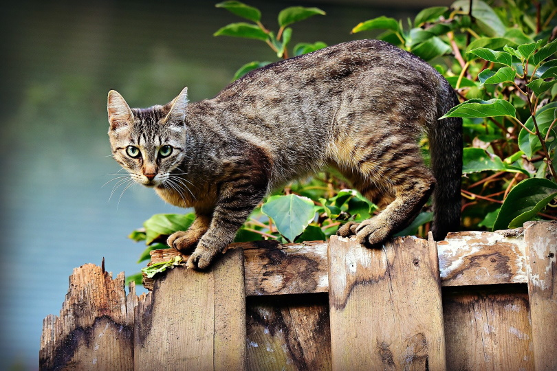 cat in wood_Mabel Amber_Pixabay