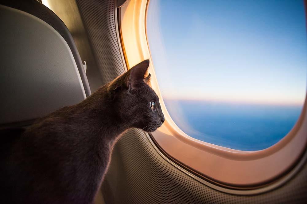 cat inside an airplane