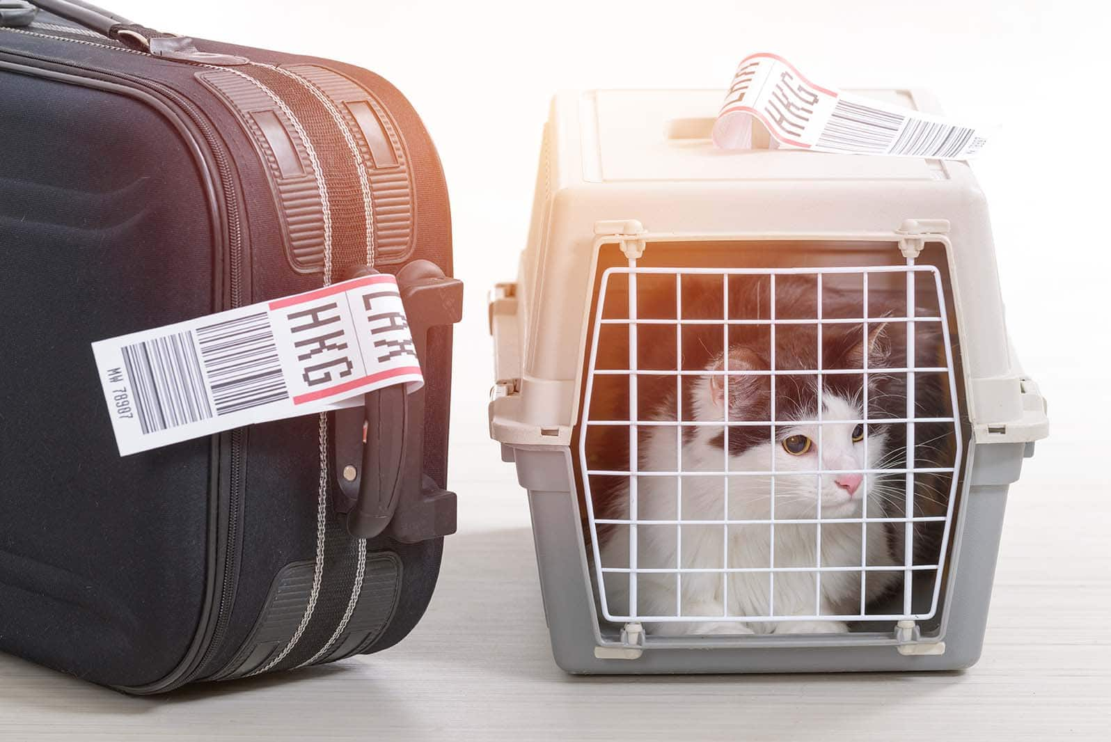 cat inside carrier beside luggage
