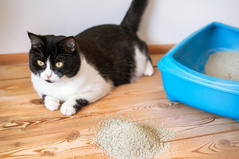 cat lying on the wooden floor beside litter box
