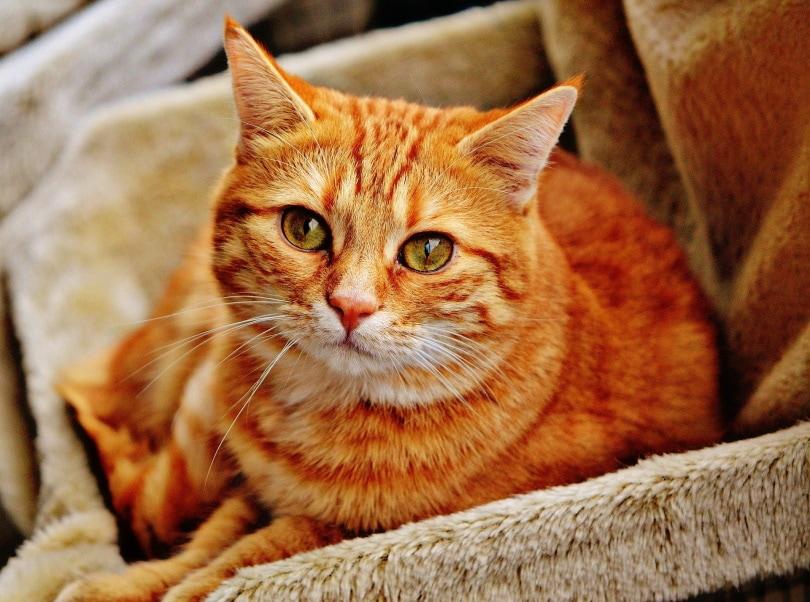 cat nesting_Alexas_fotos_Pixabay
