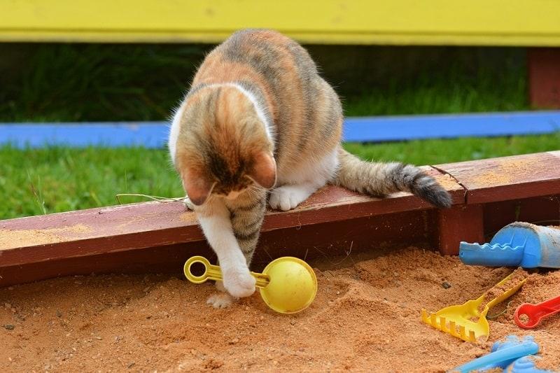 cat playing in the sandbox_Shutterstock_Marie Charouzova
