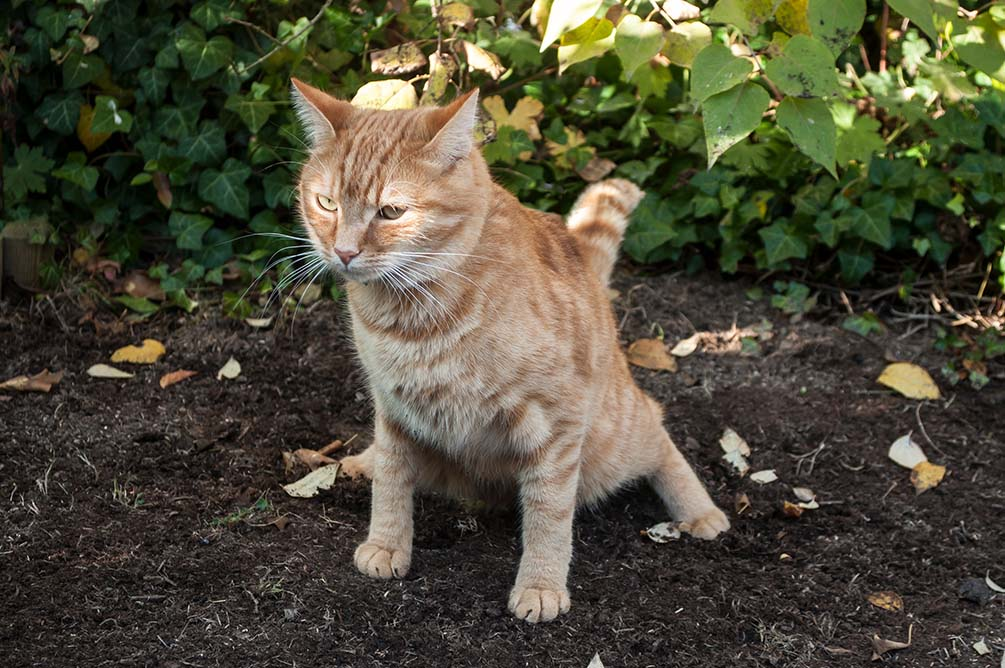 howto keep cats out of the garden naturally