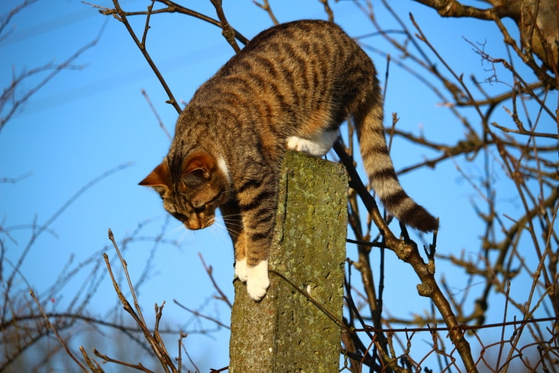 cat post_Piqsels