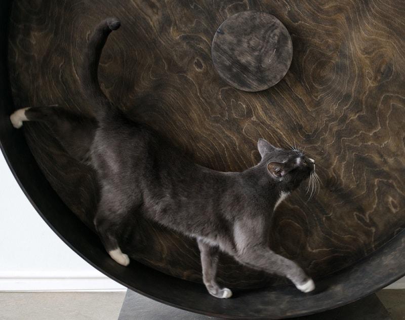 cat running on exercise wheel_Shutterstock_Dmitri Ma