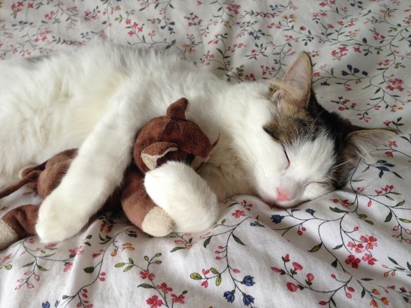 cat sleep_Ebowalker_Pixabay