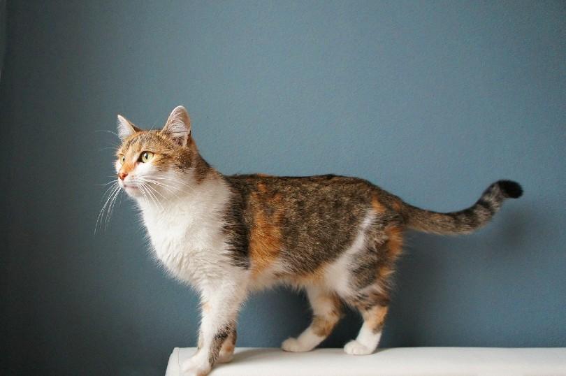 cat staring at the distance_mh-grafik, Pixabay