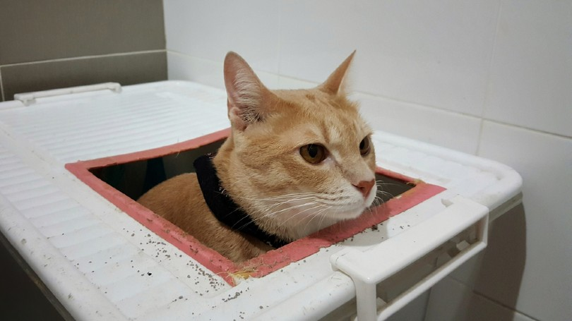 cat using DIY toilet