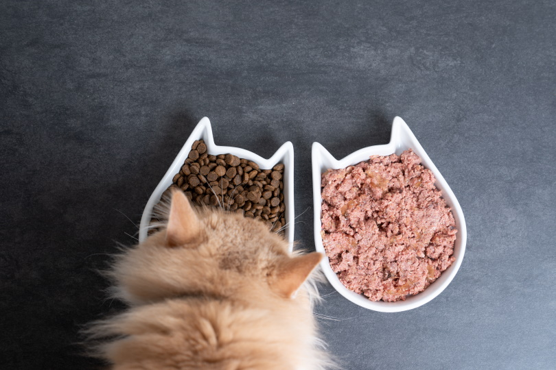 cat wet and dry food_Nils Jacobi_Shutterstock