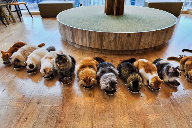 cats eating_Taras Vyshnya_Shutterstock