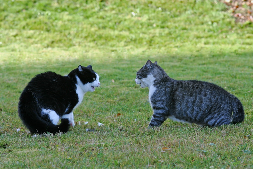 cats in gras_Astrid Gast_Shutterstock