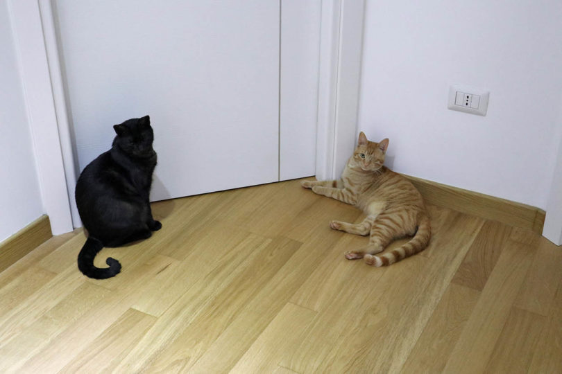 cats outside the bedroom