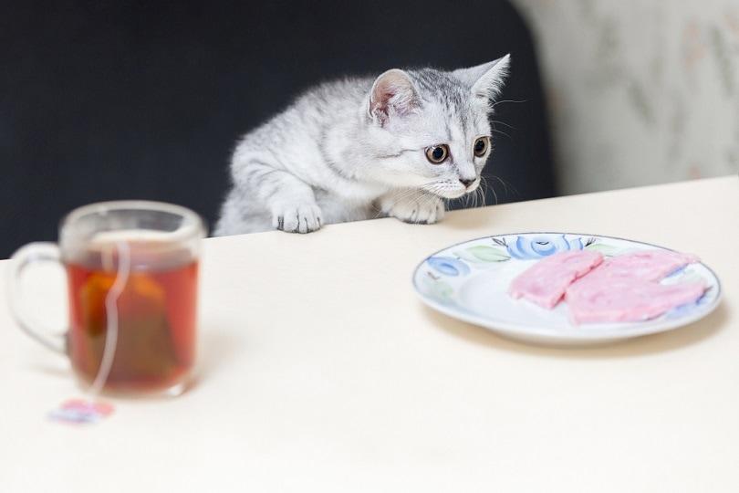 domestic-cat-hunts-for-sausage_DIP-500_shutterstock