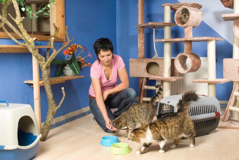 feeding cats_Dora Zett_Shutterstock