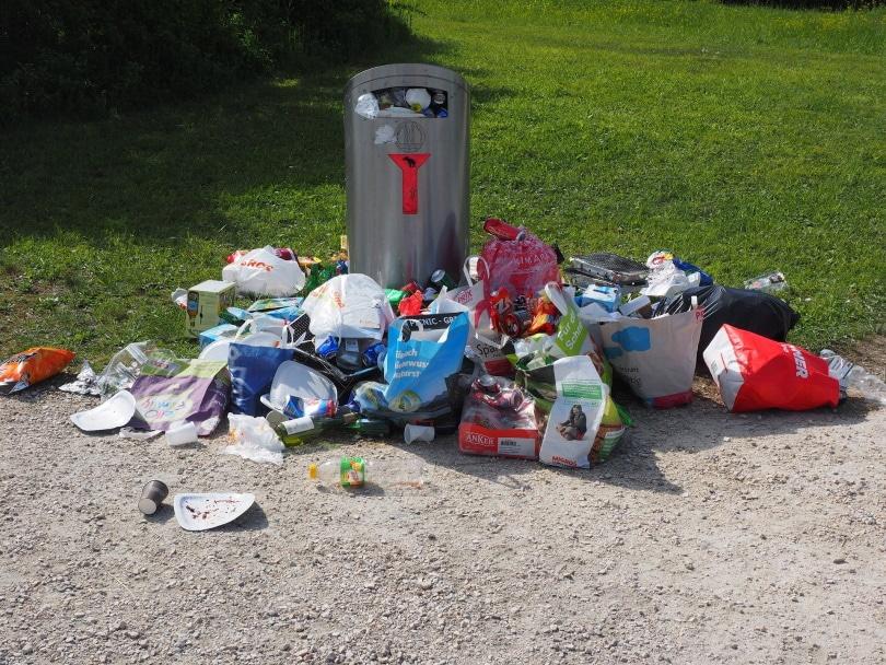 garbage-can_Hans_Pixabay