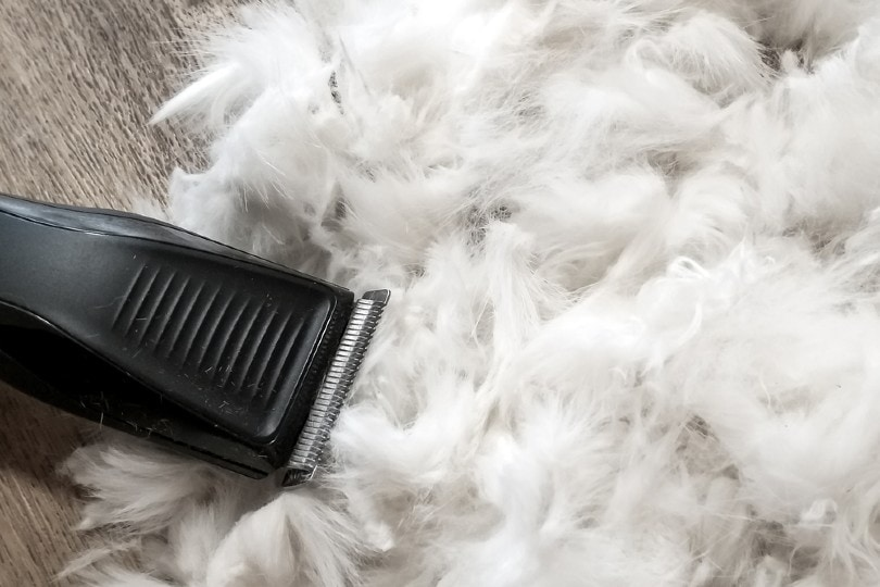 hair trimmer on cat hair
