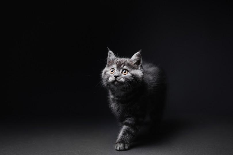 kitten_kudla, Shutterstock