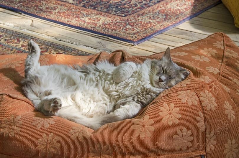 sleeping cat_ Jim Black_Pixabay