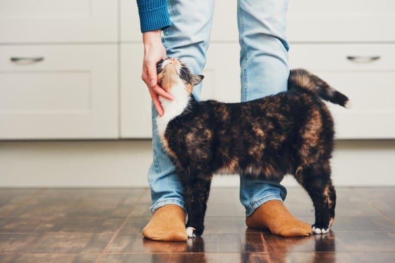 kitten training_Jaromir Chalabala, Shutterstock