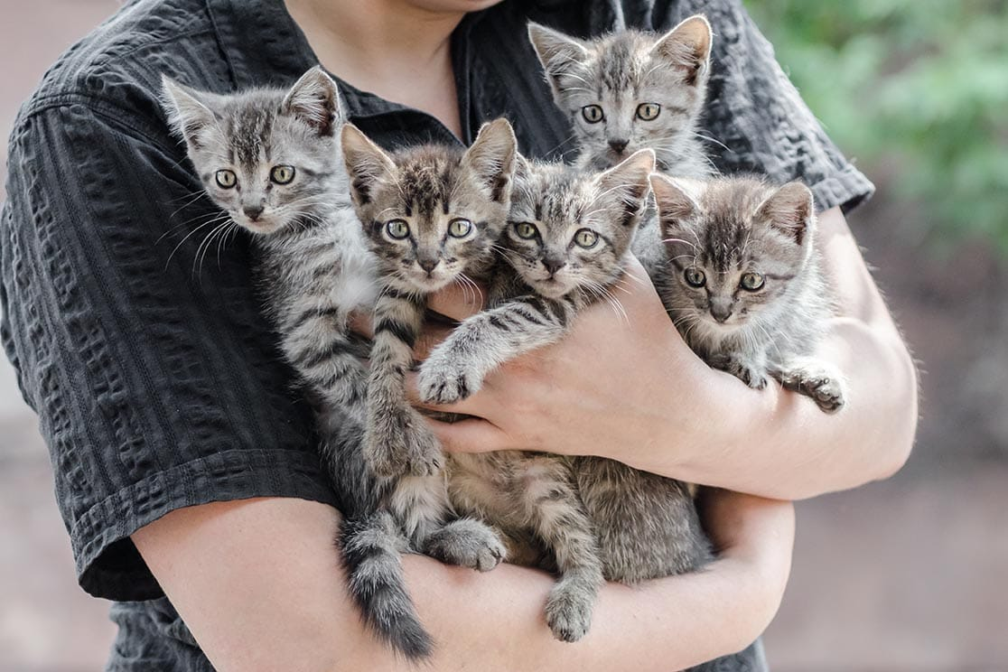 bunch of tabby kittens