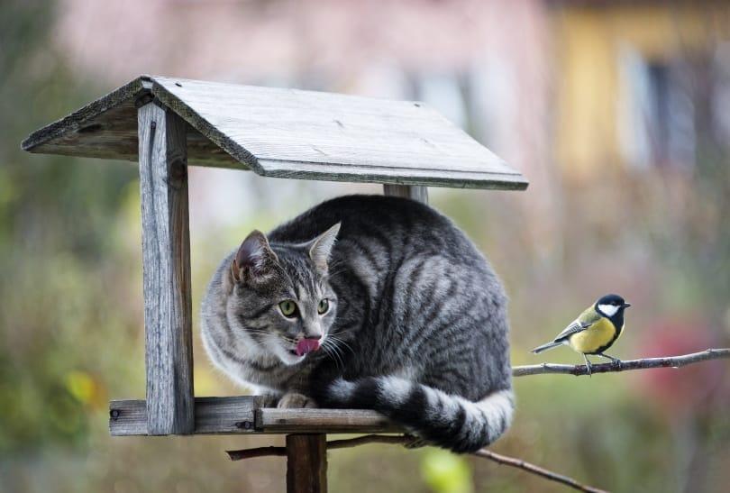 cat and bird_Kuttelvaserova Stuchelova_Shutterstock