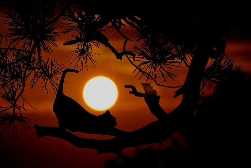 cat at dusk
