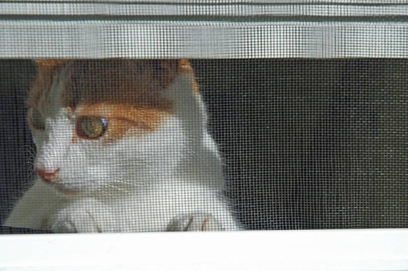 cat behind the screen door