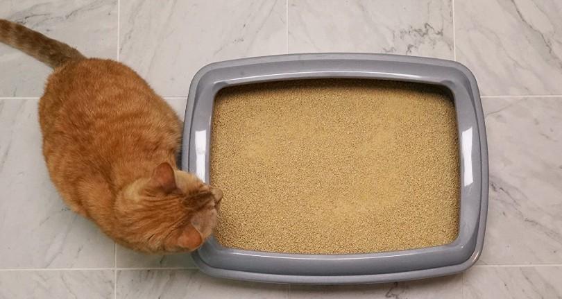 cat beside cat litter box